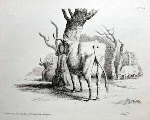 Farm Animal|Antique Prints | from Heatons 5